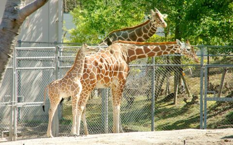 石川动物园